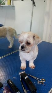Small well groomed dog 2